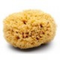 "10""-11"" Premium Rock Island Sea Wool Sponge"