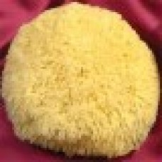 "6""-7"" Premium Rock Island Yellow Sea Sponge"
